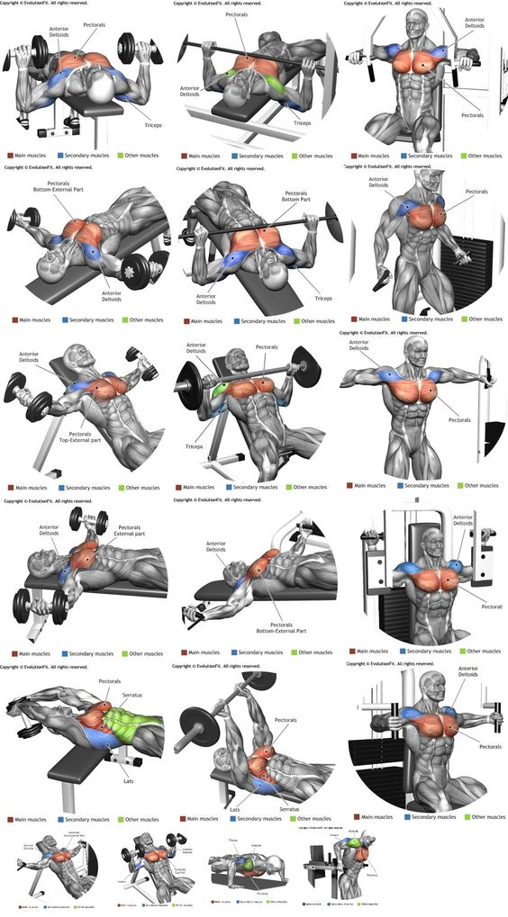 Die besten Übungen für die Brustmuskeln